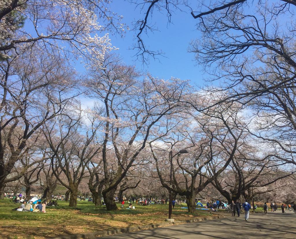 Koganei_Park_05