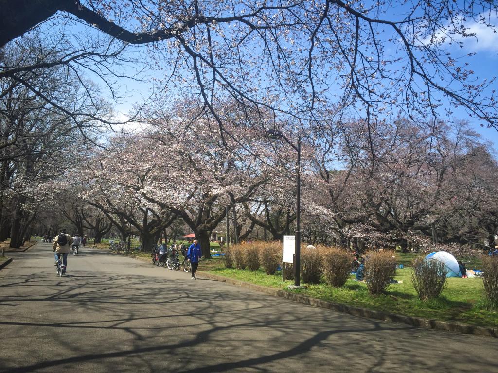 Koganei_Park_06