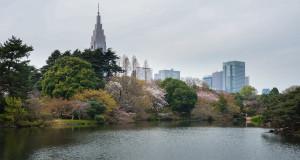 Sakura-2016_Shinjuku_Gyoen_01
