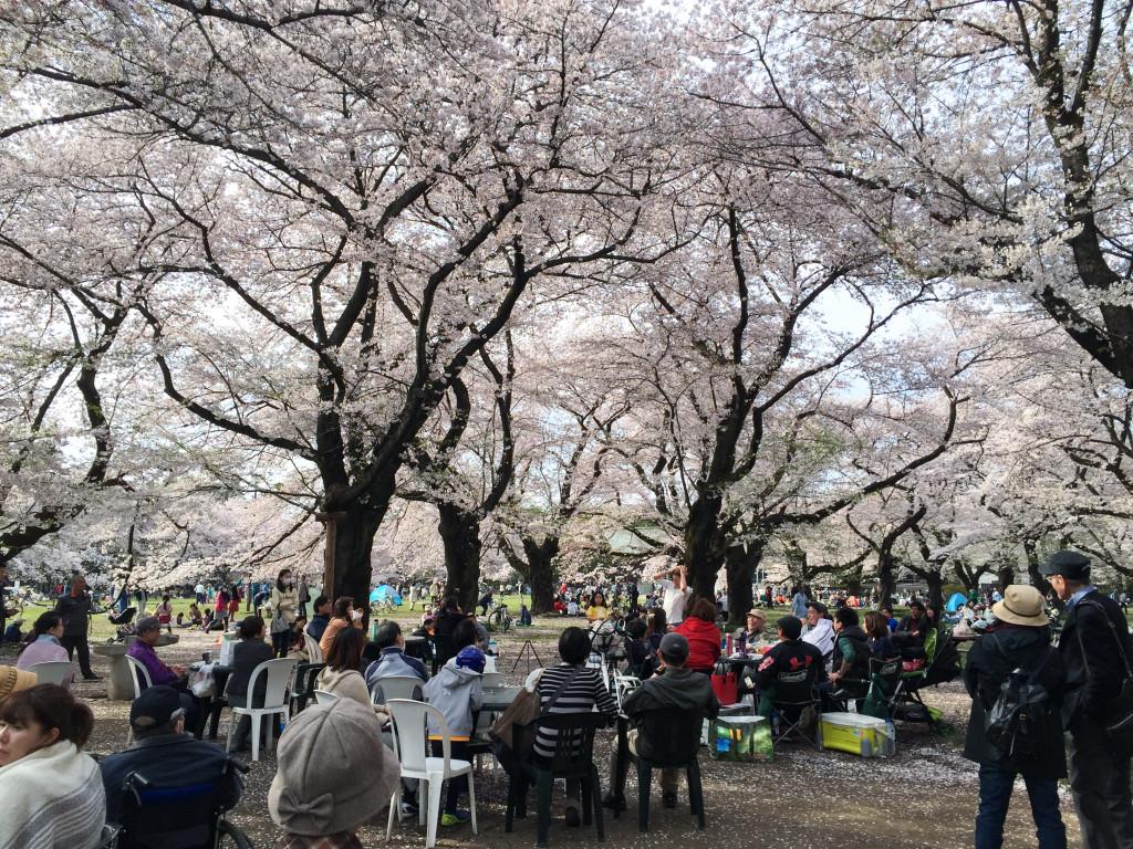 Koganei_Park_07