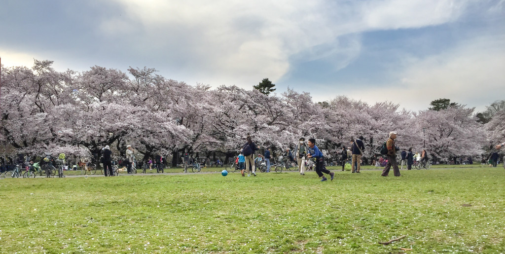 Koganei_Park_08