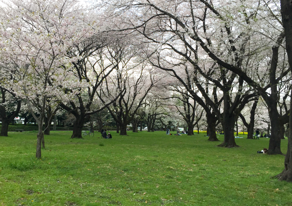 Koganei_Park_09