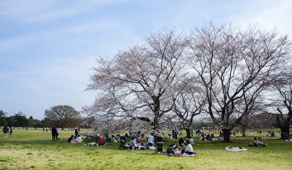 Showa_Kinen_Park_02