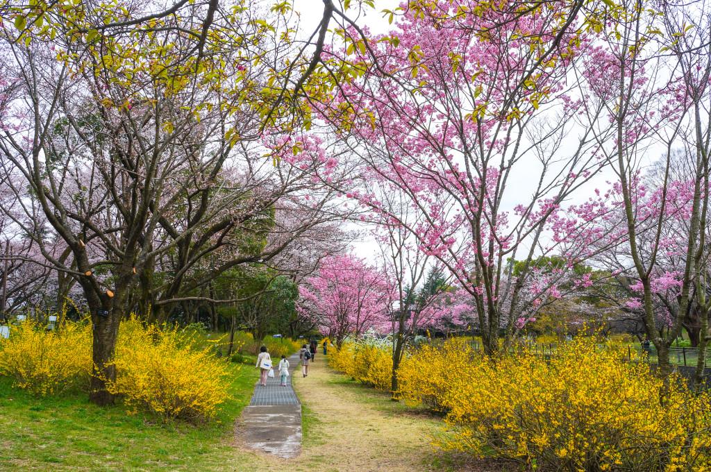 Showa_Kinen_Park_07