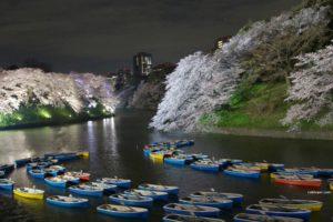 sakura-2015-chidorigafuchi03