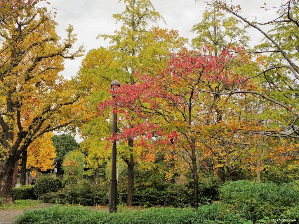autumn2016-hibiya_park06