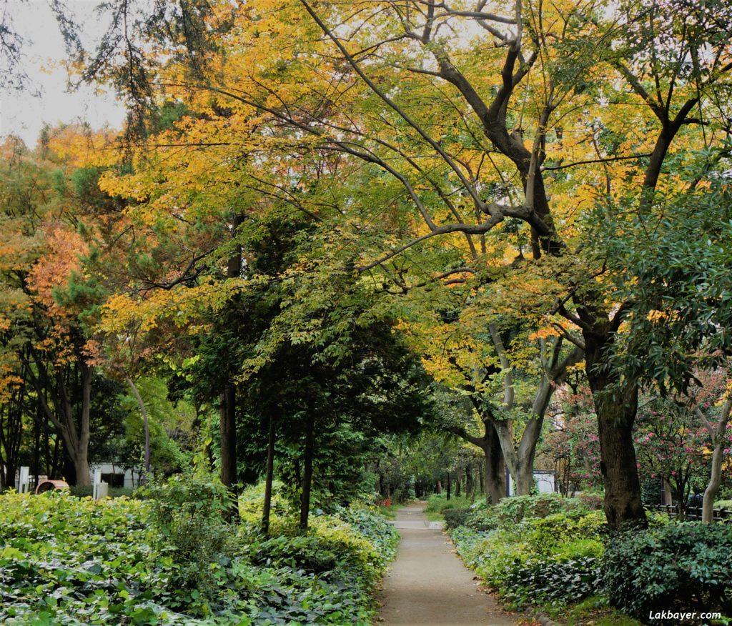 autumn2016-hibiya_park07