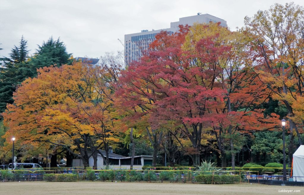 autumn2016-hibiya_park08