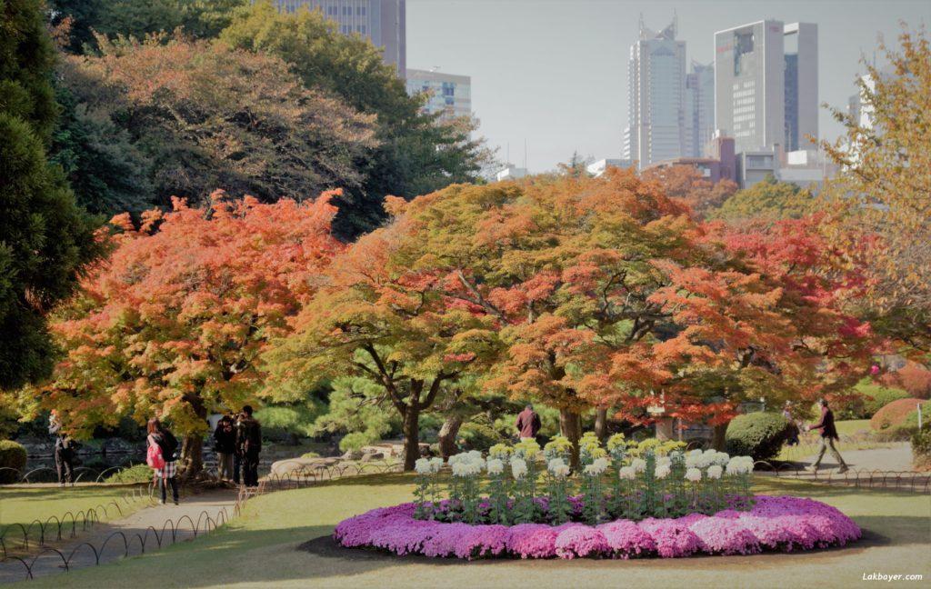 Autumn2016-shinjuku_gyoen01
