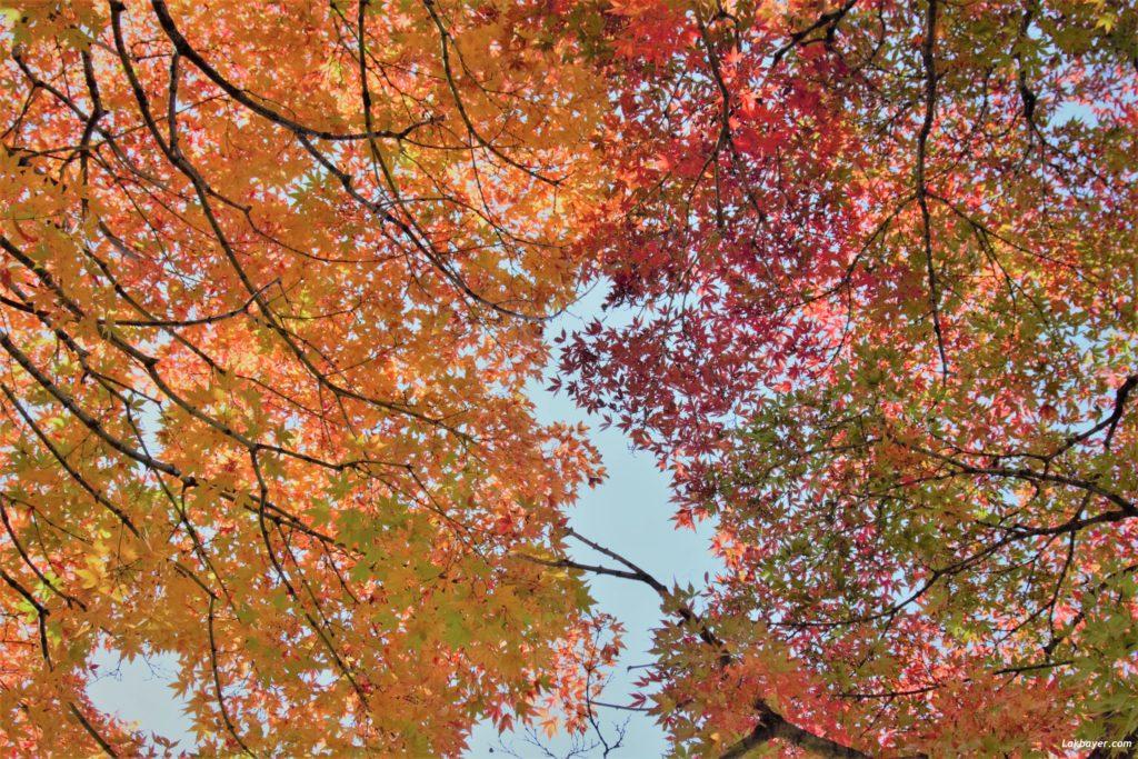autumn2016-shinjuku_gyoen02