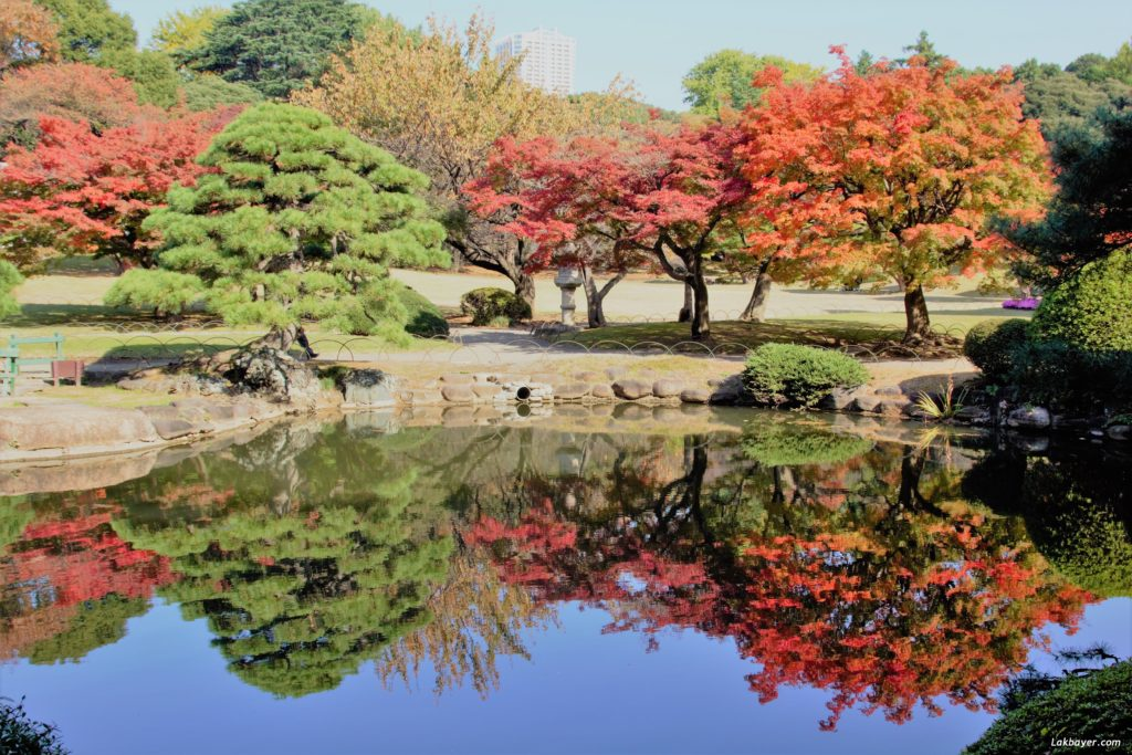 autumn2016-shinjuku_gyoen03