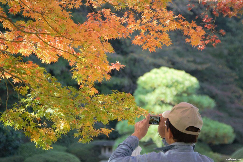 autumn2016-shinjuku_gyoen04