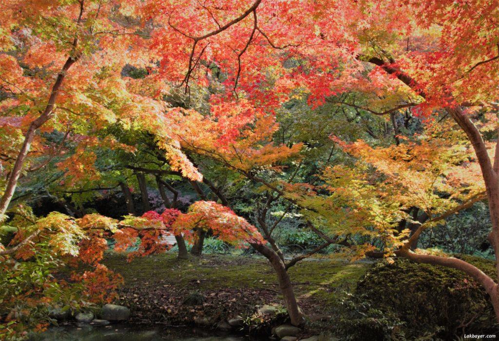 autumn2016-shinjuku_gyoen05