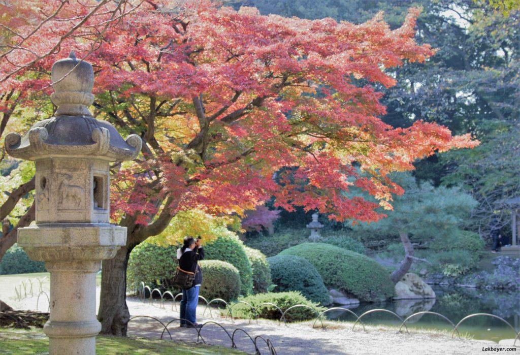 autumn2016-shinjuku_gyoen06