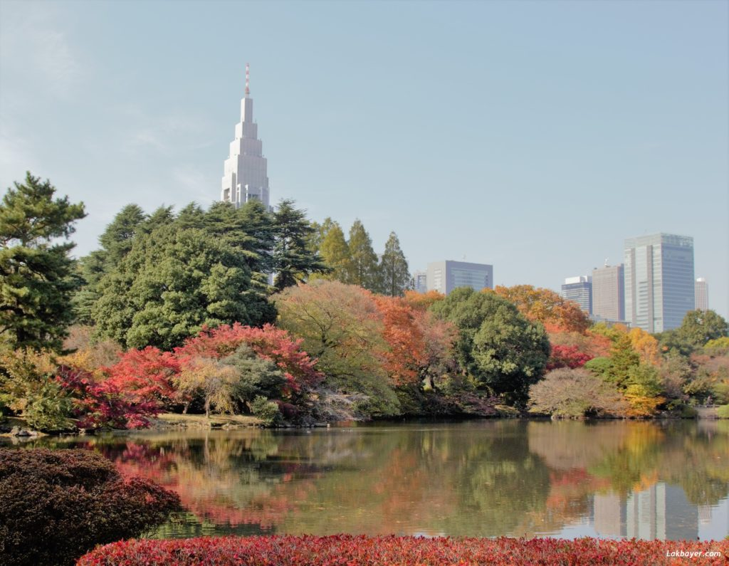 autumn2016-shinjuku_gyoen07