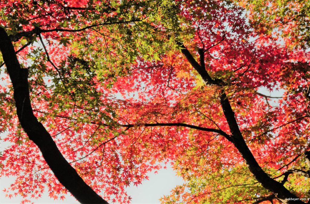 autumn2016-shinjuku_gyoen10