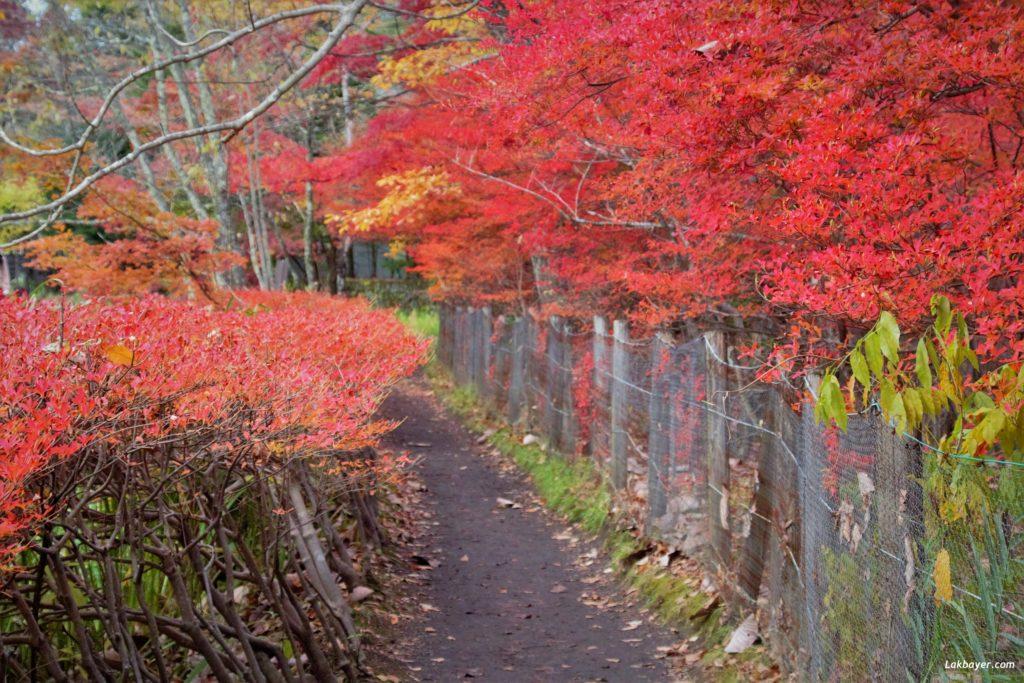 autumn2016_karuizawa05