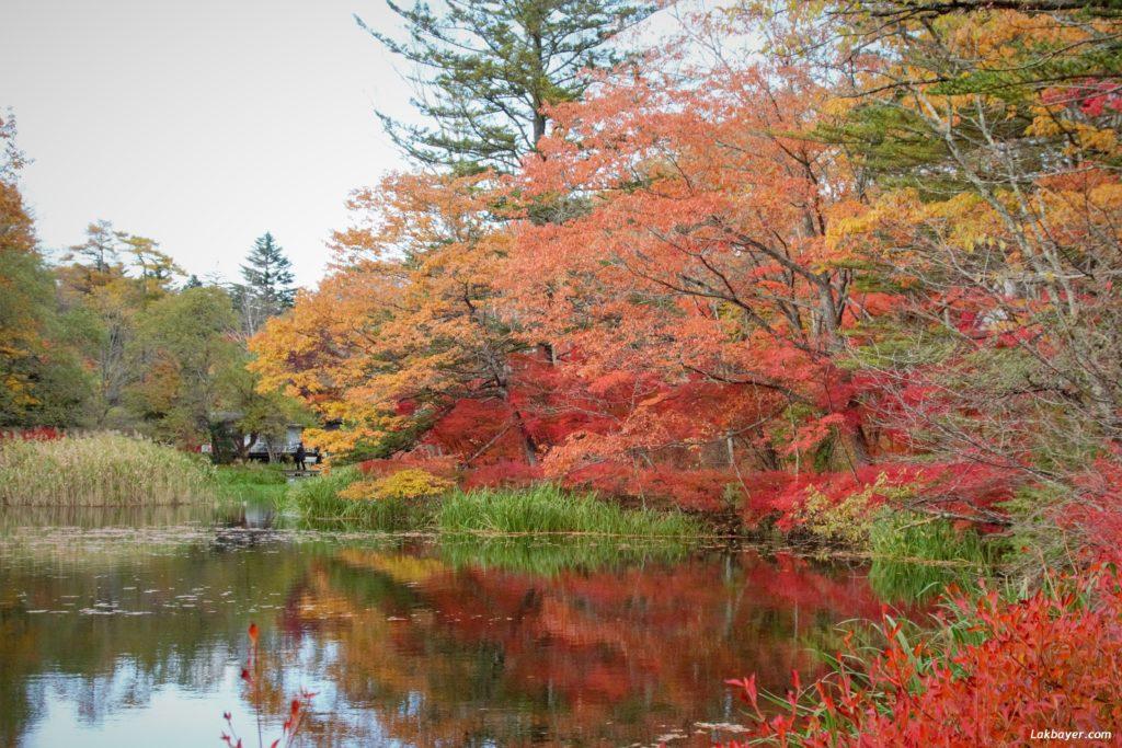 autumn2016_karuizawa06