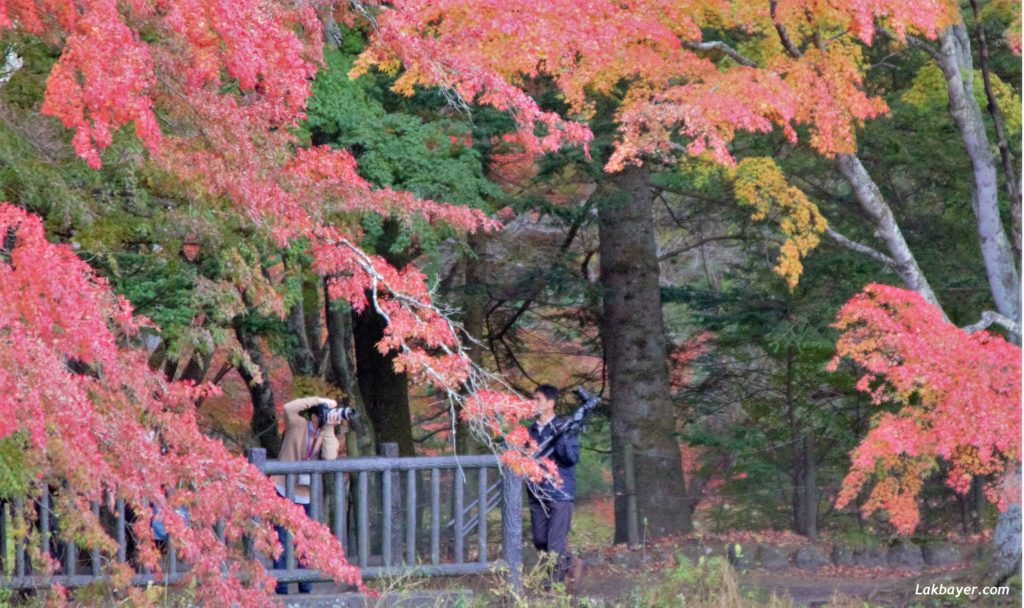autumn2016_karuizawa09