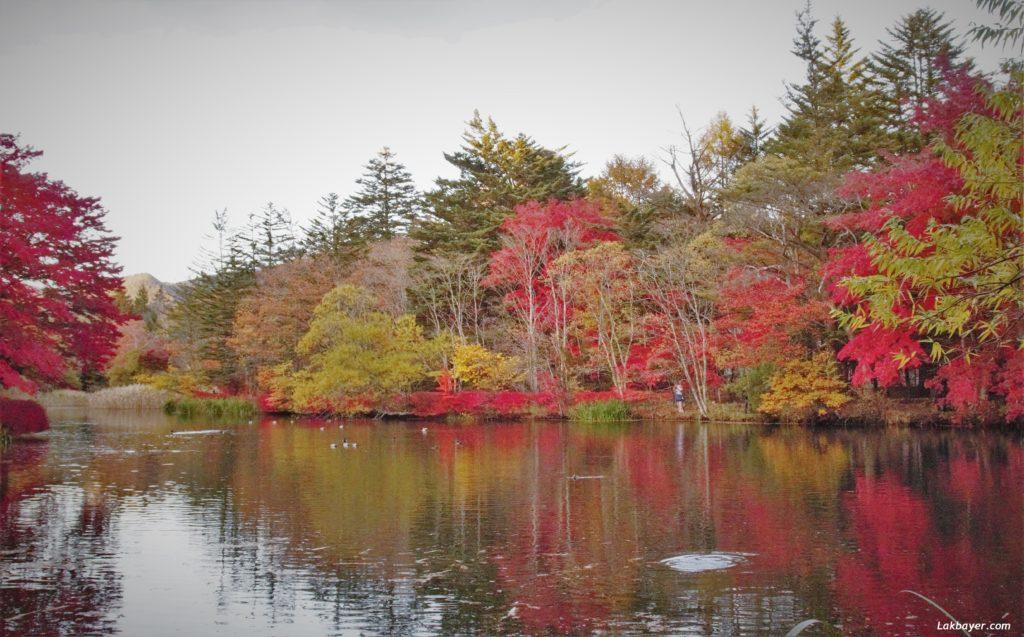 autumn2016_karuizawa10