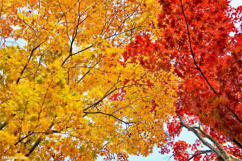 autumn2016_showakinenpark05