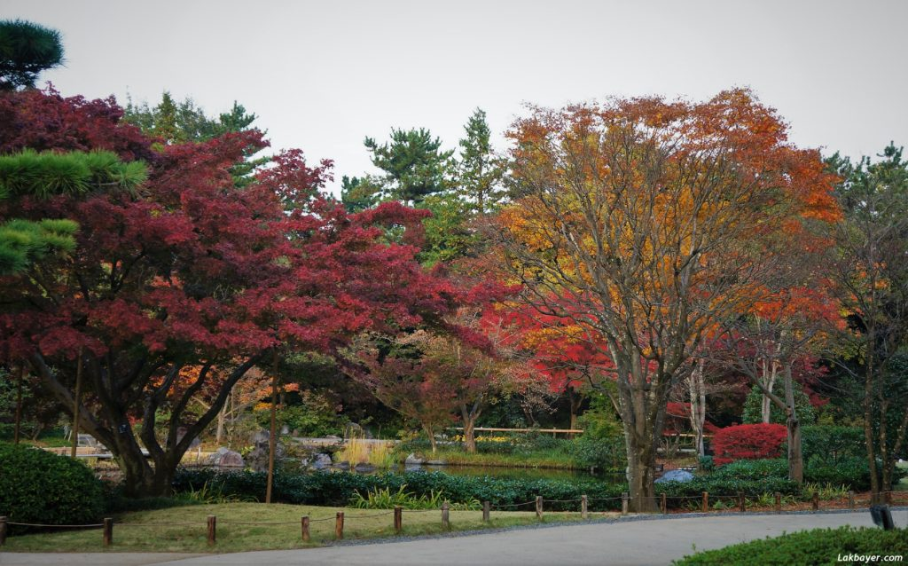 autumn2016_showakinenpark06