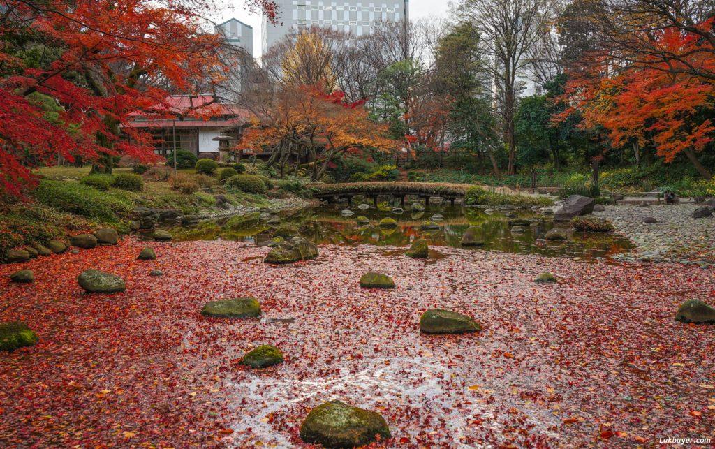 autumn2016-koishikawa-korakuen-04