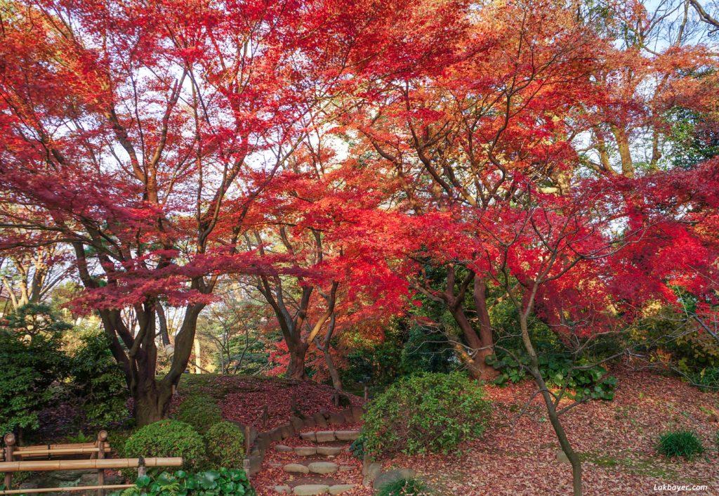autumn2016-koishikawa-korakuen-05