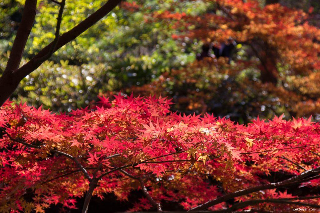 autumn2016-rikugien-04