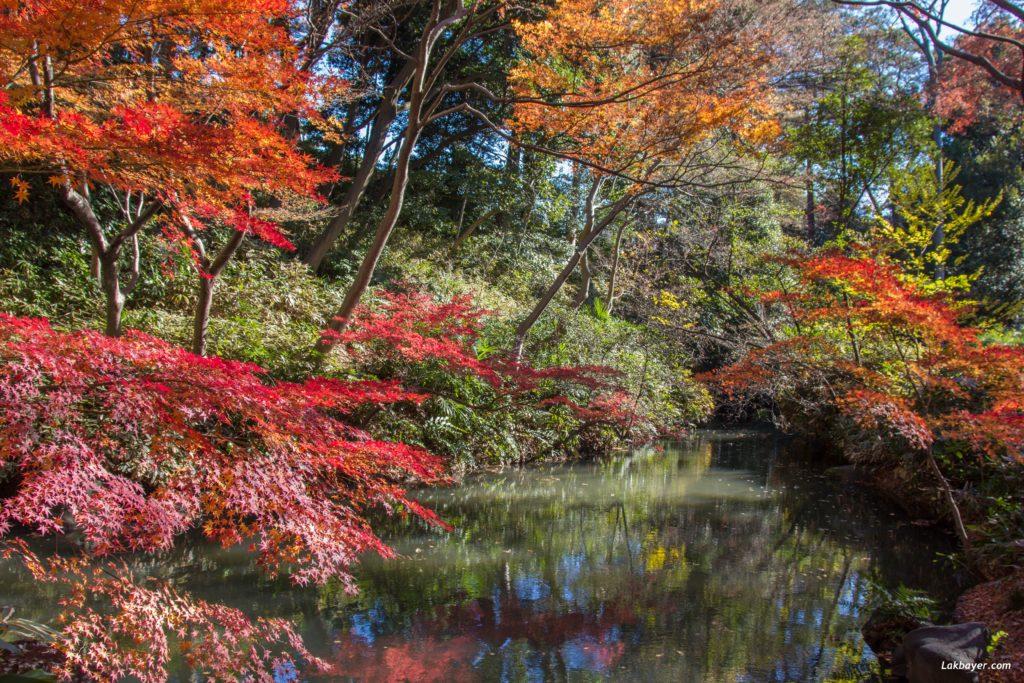 autumn2016-rikugien-05