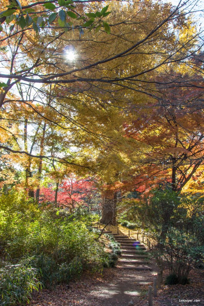 autumn2016-rikugien-06